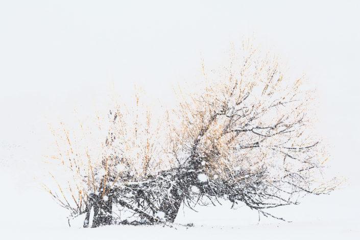 abruzzo alberi