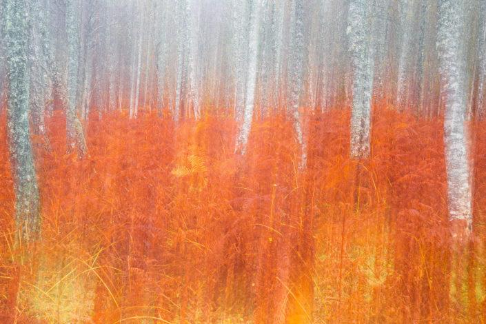 autumn-wood