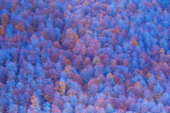 faggi autunno